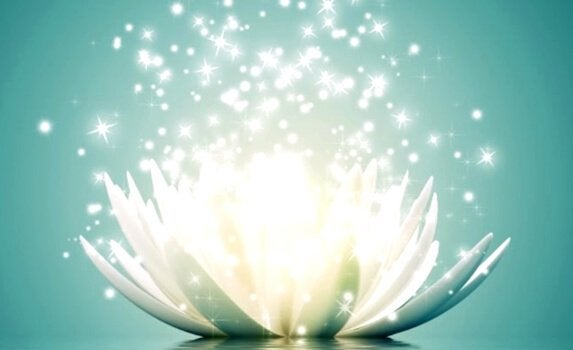 lotus çiçeği
