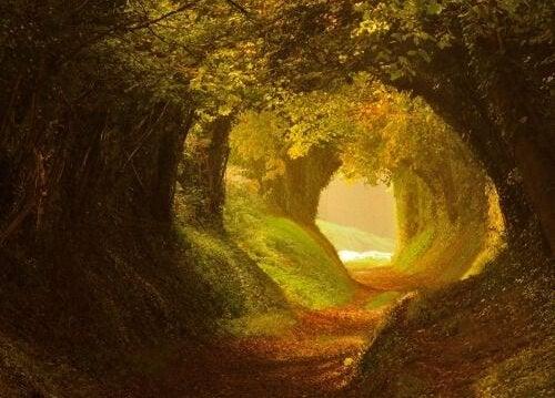 ışıklı orman yolu