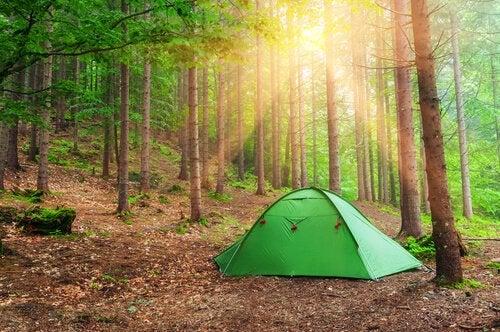 ormanın içinde yeşil çadır