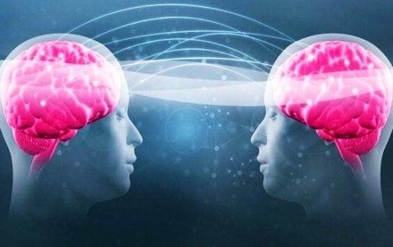 Triptofan ve Serotonin: Sağlığınız İçin Önemi