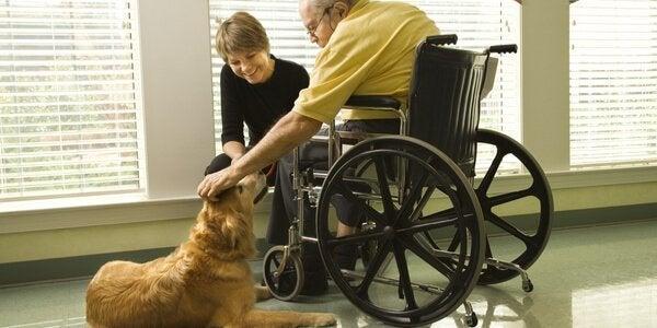 tekerlekli koltuktaki adam ve köpek