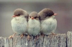arkadaşlığın 3 farklı çeşidi