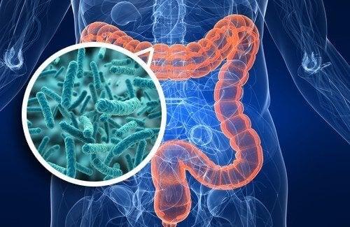 bağırsak ve bakteriler