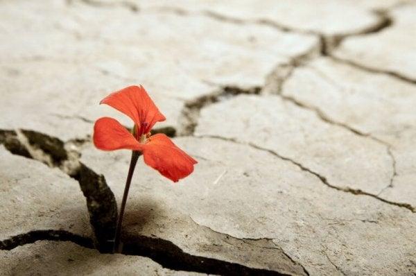 betondan çıkan çiçek