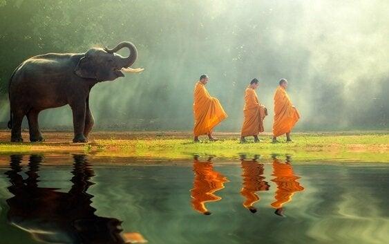 budistler ve fil