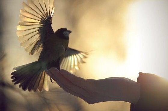 kuş tutan el