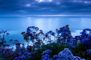 mavi deniz ve çiçekler