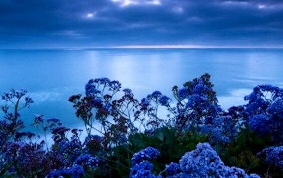 Stresi Azaltan Renk: Mavi