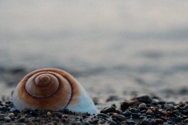 sahildeki salyangoz