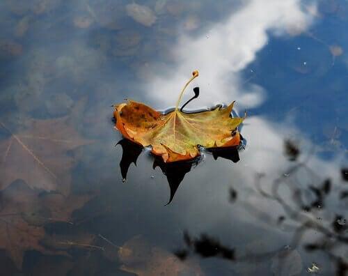 suyun üstündeki yaprak