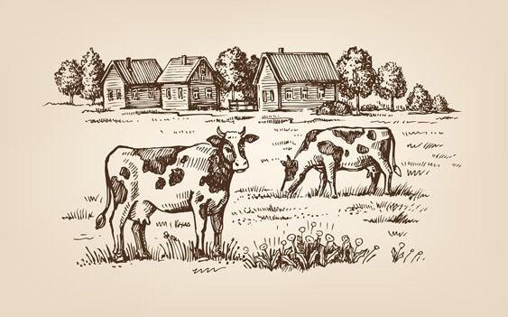 tarlada inekler