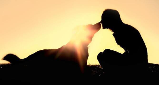 hayvan sevgisi
