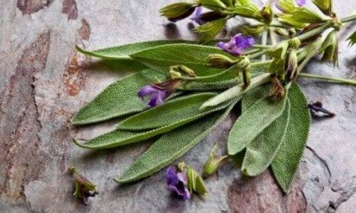 Kadınlar için Mükemmel Bir Bitki Olan Ada Çayı ve Faydaları