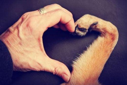 köpek patisiyle insan eli kalp