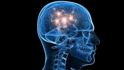 depreks insan beyni
