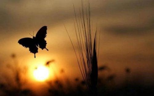 gün batımı kelebek