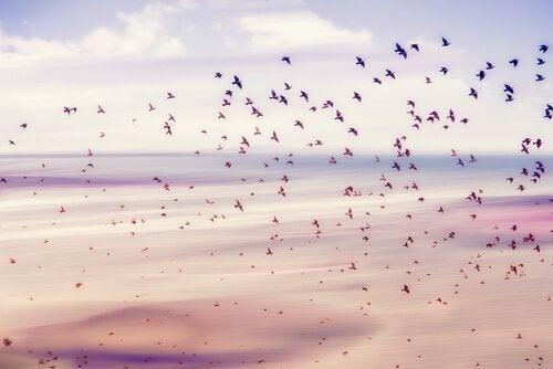gökyüzünde uçuşan kuşlar