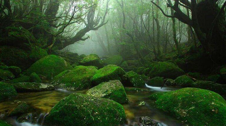 orman görüntüsü