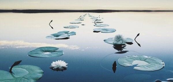 suda duran bir sürü nilüfer