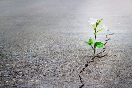 asfaltta açan çiçek