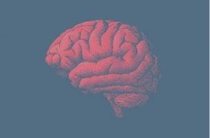yaşlı beyin