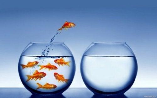 değişimi seçen balık