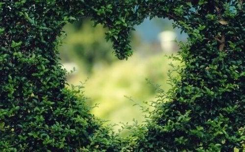 kalp şeklinde yeşillik