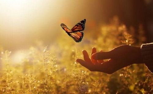 uçan kelebek