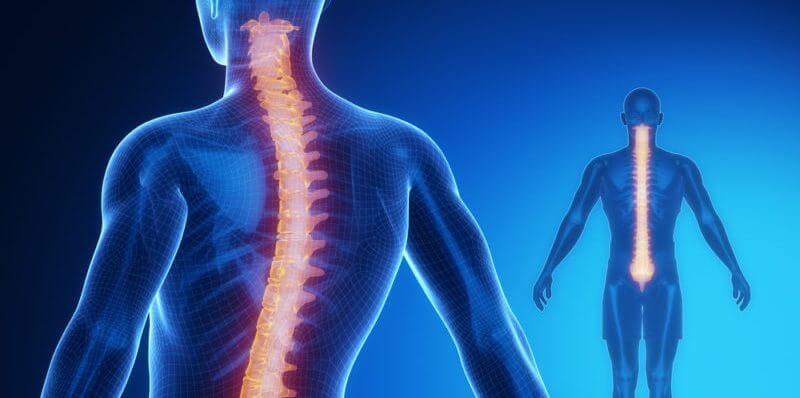 Omurilik: Anatomi Ve Fizyoloji