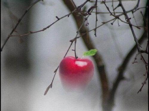 elma ve ağaç