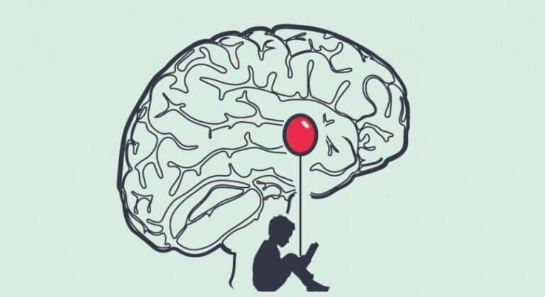 Beyinde bulunan amigdala