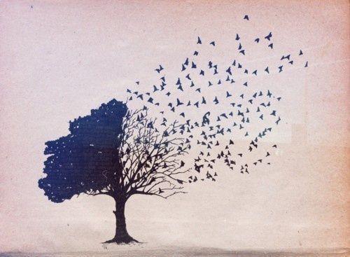 Kuşlara ayrılan bir ağaç