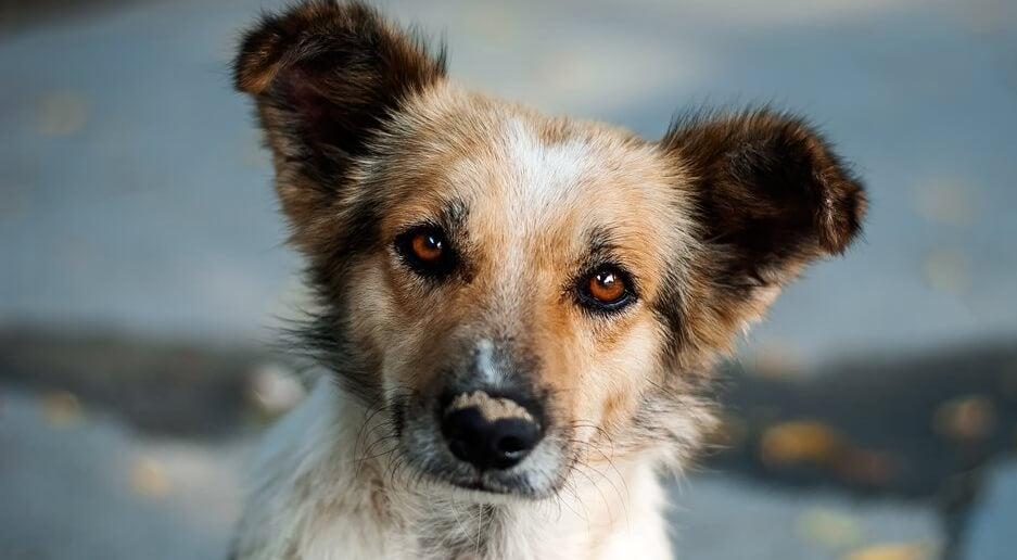 Meraklı Köpek Yavrusu: Özyansıtma Hakkında Güzel Bir Hikaye