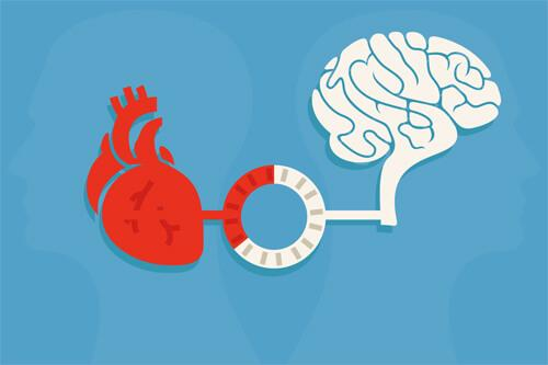 kalp ve beyin