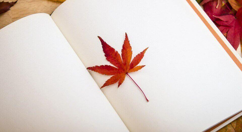 kitap arasına konan yaprak