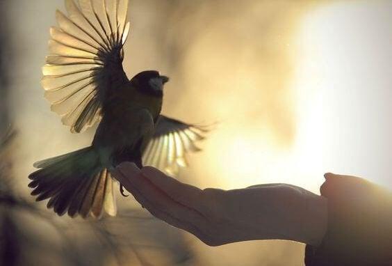 Ele konan bir kuş