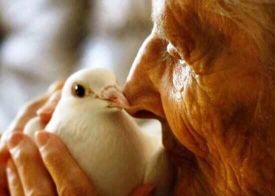 Güvercin tutan yaşlı