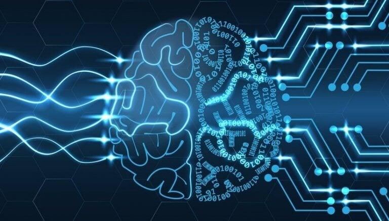 beynin bağlantıları