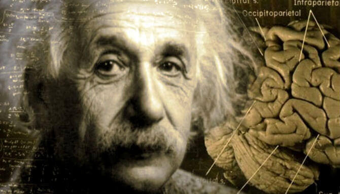Einstein'ın Beyninin İnanılmaz Hikayesi