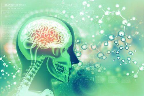 folik asit ve beyin ilişkisi
