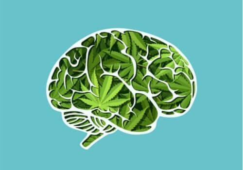 Marihuananın Uzun Vadede Beyin Üzerindeki Etkileri