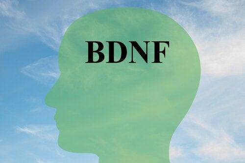 BDNF Nasıl Arttırılabilir? Sağlıklı Beyin Hücreleri İçin Anahtar Bir Protein