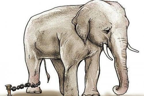 ayağı zincire bağlı üzgün fil