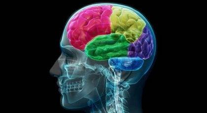 Bir Bağımlının Beyni: İstek Ve İhtiyacın Anatomisi