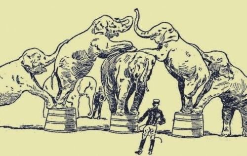 filler hayvan terbiyecisi
