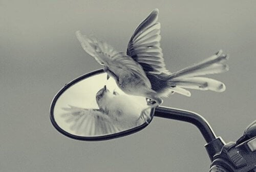 Özgürlük ve Gelişimimizi Engelleyen Ego Tuzakları