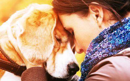 Niçin Hayvanları Çok Seviyoruz?