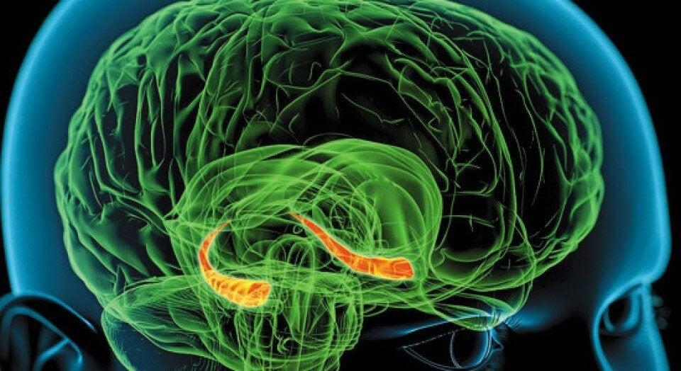 insan beyin yapısı