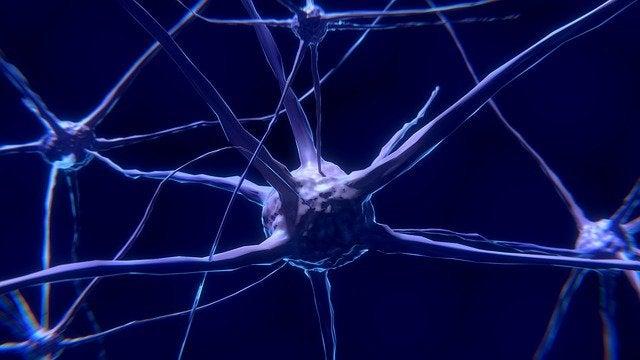 Nöronlar: Nedir ve Nasıl Çalışırlar?