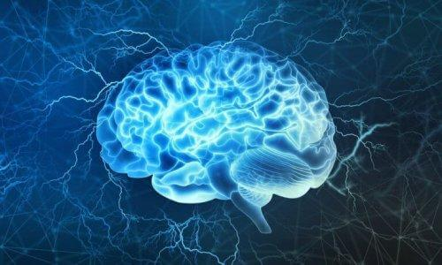 Prefrontal Korteks: Beynin En İlginç Bölümlerinden Biri
